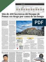Más de 400 hextáreas del Bosque de Pomac en riesgo a causa de un hongo