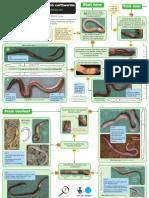 OPAL Grassland Earthworm Key