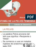 lapelvisfemenina exp.pptx