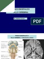 6ta Clase Neuro - Tronco Encefalico - Dr. Correa