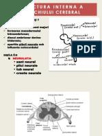 Structura Interna Trunchi Cerebral