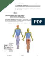 P raquideos.pdf