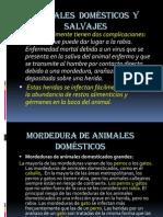 11 Picaduras y Mordeduras de Animales (1)