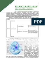 IES - Estructura de la célula