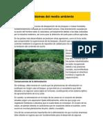 Problemas del medio ambiente.docx