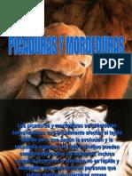 Picaduras y Mordeduras 7