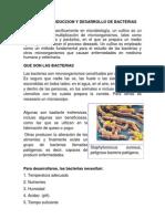 Cultivo de Bacterias