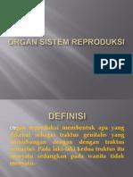 Organ Sistem Reproduksi