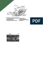 aterosklerosis