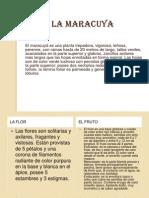 lamaracuya-100311170612-phpapp02
