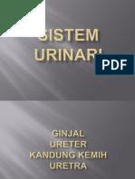 Sistem urinari.pptx
