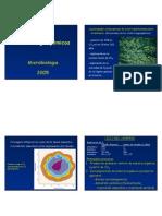 Ciclos Biogequimicos.pdf