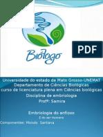 embriologia anfioxo