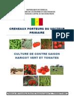 Culture Contre SaisonHaricot Vert Tomates