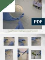 Documento Biotecnologia Soja (Prerparacion Isoflavonas)