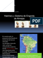 Sistema de Hatchery Para Engorda de Almejas