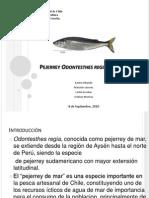 Presentación Pejerrey (Odontesthes regia)