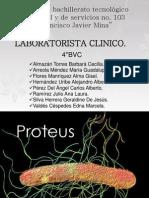 Bacteria Proteus