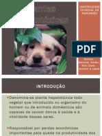 Plantas hepatotóxicas