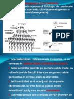 Spermatogeneza Si Ovogeneza Ppt.