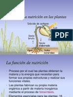 11_nutricion_plantas.ppt