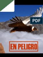 El Cóndor andino al borde del abismo