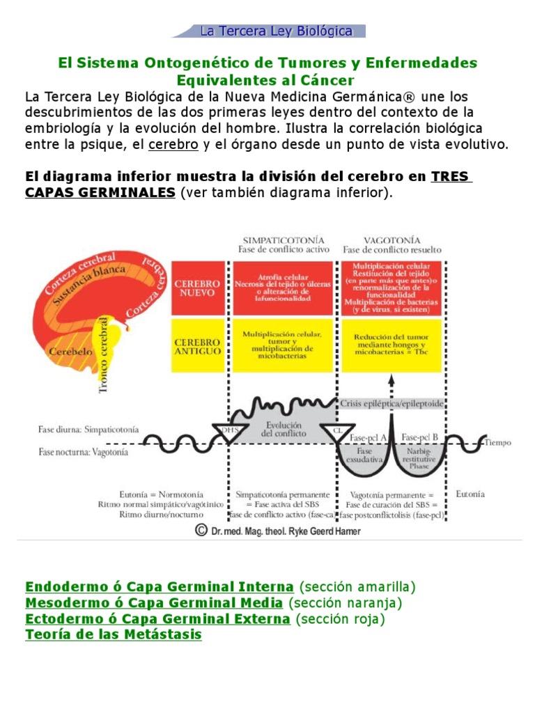 Hermosa Dentro Diagrama Cerebro Colección - Imágenes de Anatomía ...