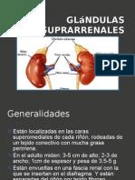 Glándulas suprarrenales