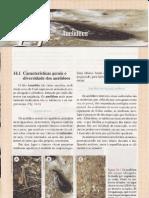 CAP.14-ANELÍDEOS
