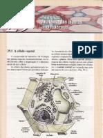 Cap.29-Anatomia Das Plantas Angiospermas