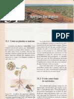 CAP.31-NUTRIÇÃO DAS PLANTAS