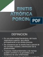 Rinitis Atrofica Porcina Ppt Clase