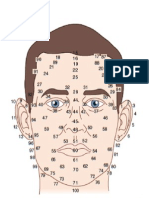 Facial Map Male