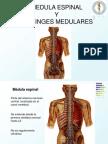 Ppt Medula