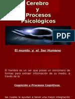 Corteza y Ser Humano 2013