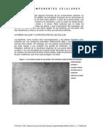 24 COMPONENTES CELULARES.pdf