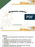 leccion6membranas celulares