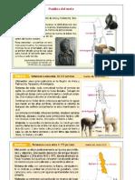 Textos Informativos Pueblos Originarios