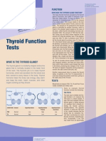 Thyroid function