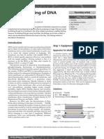 Alkaline Blotting of DNA gels.pdf