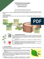4.+Guia+Tejidos+Vegetales