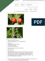 Ananasove Zlte - Solanum Lycopersicum Mill