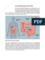 Anatomy and Physiology of the Colon