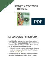 Anatomía - Sensación y Percepción