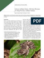 Theloderma stellatum - a rare frog