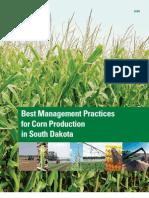 Corn Planting Best Practises