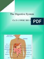 35-1 digestion