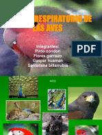 Sistema Respiratorio Aves