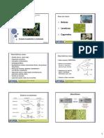 Fungos Filamentosos e Leveduras - Slides