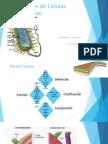 Organelas de Células Procariotas